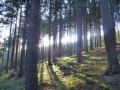 Schöne Momente im Thüringer Wald direkt am Haus