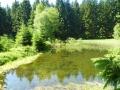 Enzebachteich mittn im Wald oberhalb des Ferienhauses